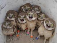 baby-owls-cute-animals-birds-pics.jpg