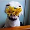 Место для радости - последнее сообщение от Собак