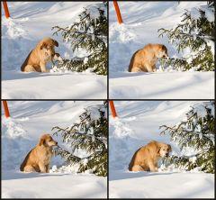 Рассказ про то, как жёлтая собака задумчиво поедала ёлку