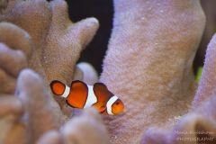 Маленький подводный мир