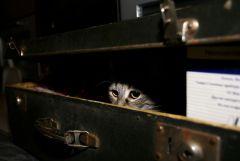 в новогоднем чемодане
