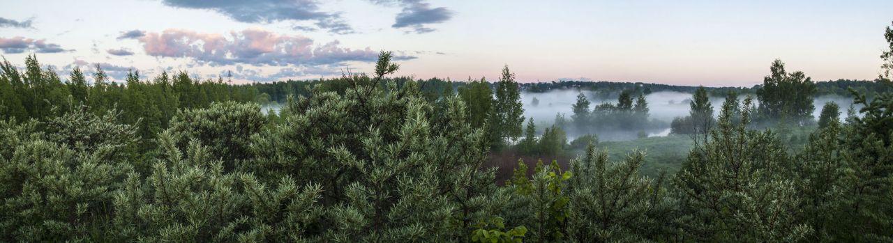 Облепиховый лес у Комариного Рая