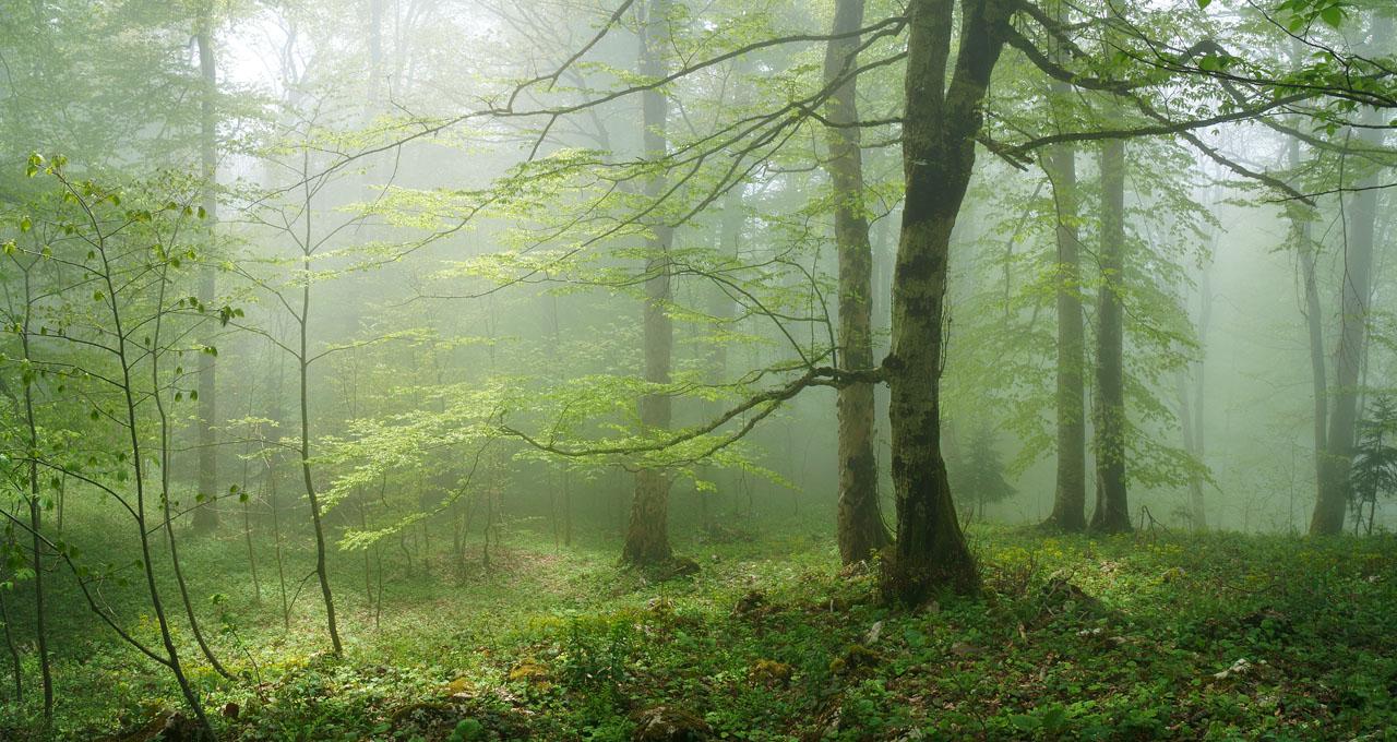 В буковом лесу 2