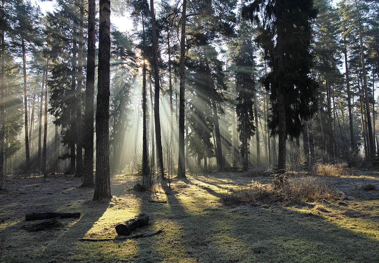 Апрельское утро в лесу