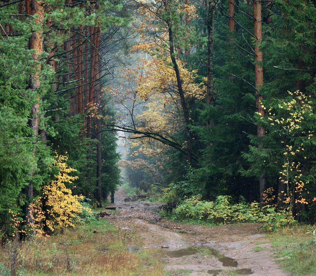 Гуляя по осеннему лесу