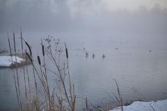 Туман, утки и камыши