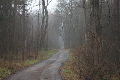 Дорога куда-то