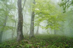 В буковом лесу 3