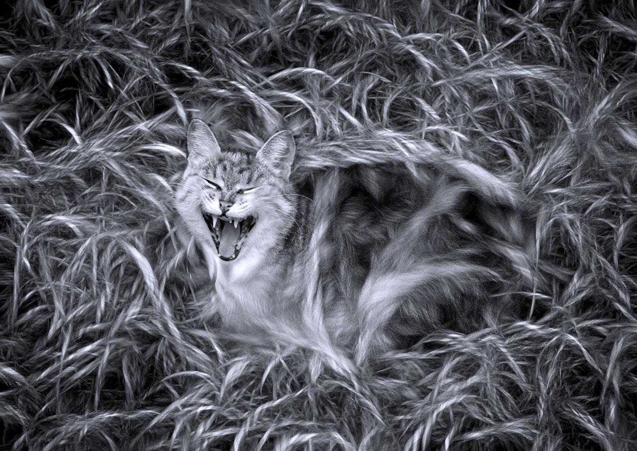 Чеширский кот в гостях у кота Шредингера