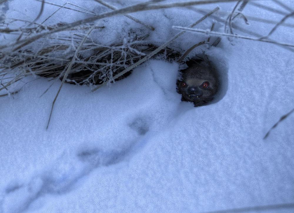 Мышка в норушке... Или ласка неласковая?