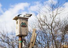 Этих птиц голыми руками не возьмёшь )))