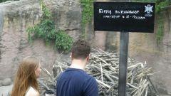 Московский зоопарк. Бобры.