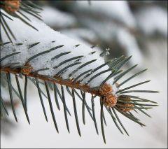 Шишечки-иголочки-снежинки