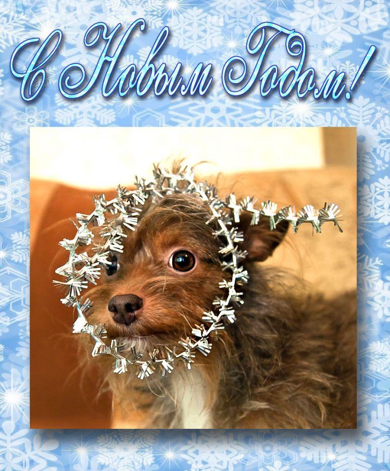 С Новым Годом, ПУШОРГ!!!