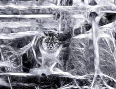 Голод кота Шредингера
