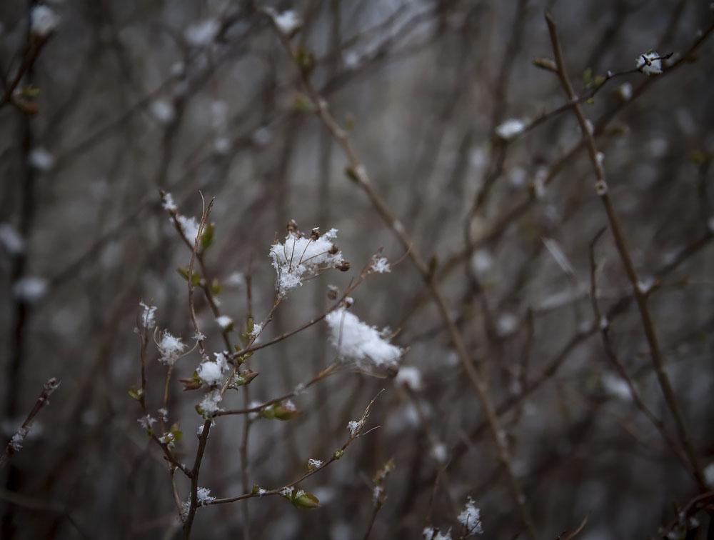 Снежные нежные