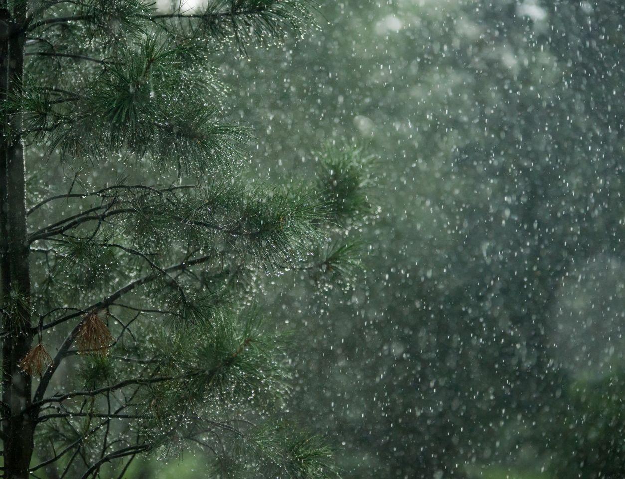 Звонкий Дождь