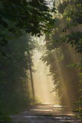 Сказочный свет