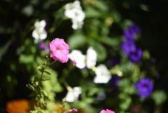 Цветочный вихрь
