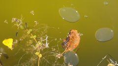 Капельки льда и цветочный орнамент на осеннем пруду