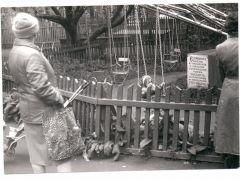 Парк г. Пушкино 1985г.