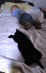 У котиков тихий час