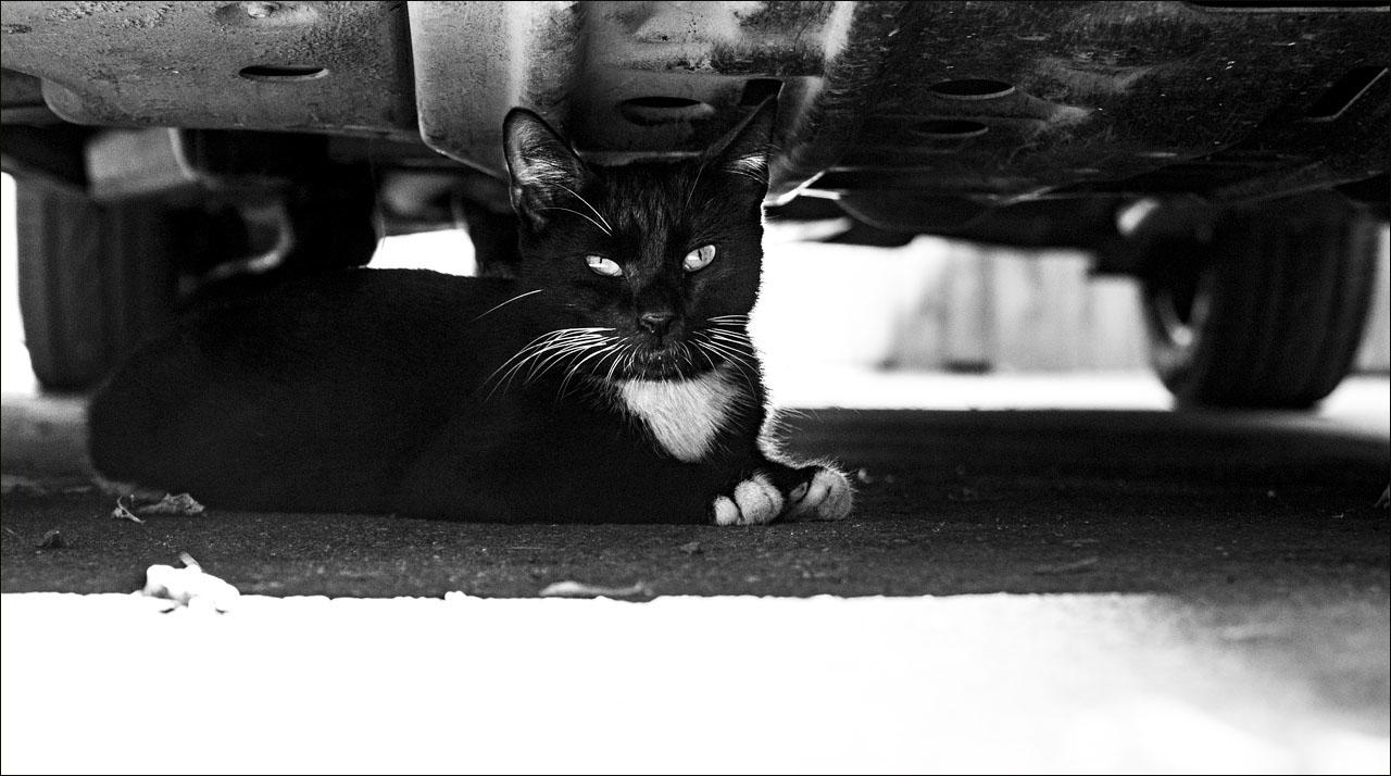 Тайная жизнь кошек