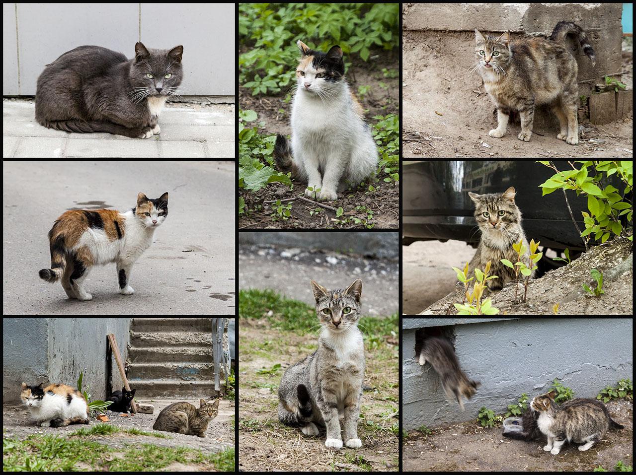 Котики весенние