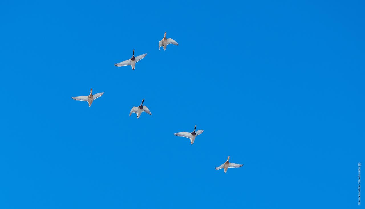 Летять ууутки (II)