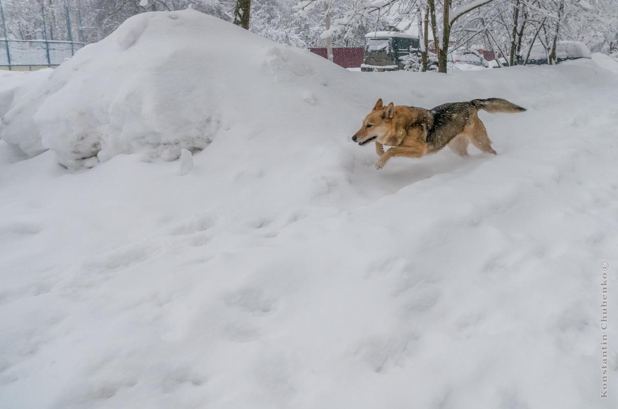 Пёс зимний веселый обыкновенный