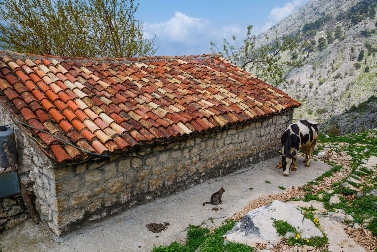 Домик в горной деревне (Черногория)