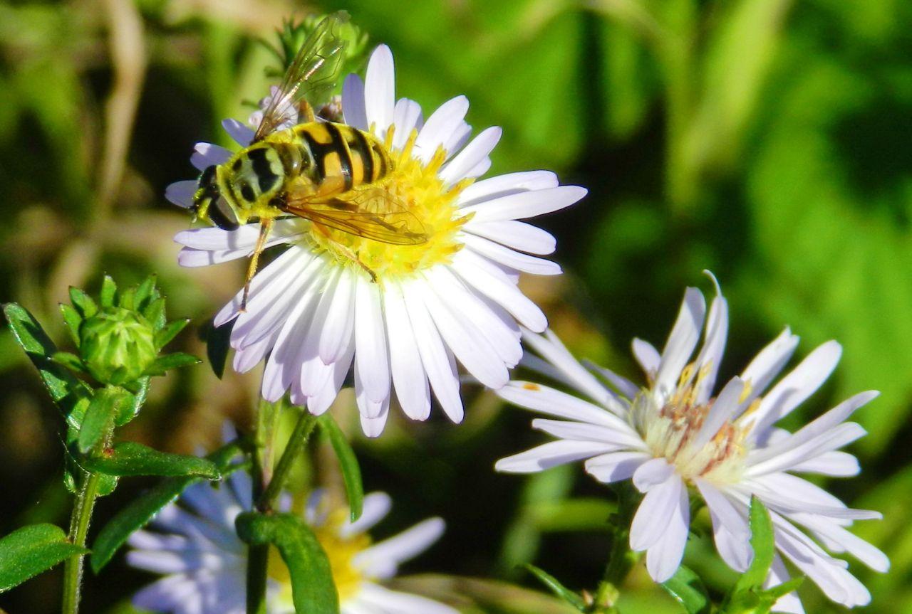 Из жизни насекомых.