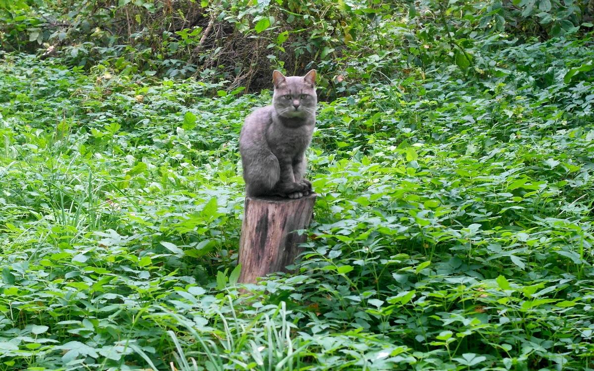 И днем и ночью кот ученый сидит там на пне