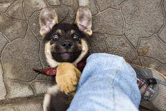 Привет! Чертовски рада тебя видеть? Я полежу у твоей ноги?