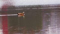 Обитатель Травинского озера