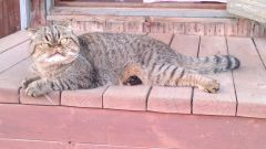Соседский котик!!!