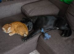 Спят усталые зверушки1