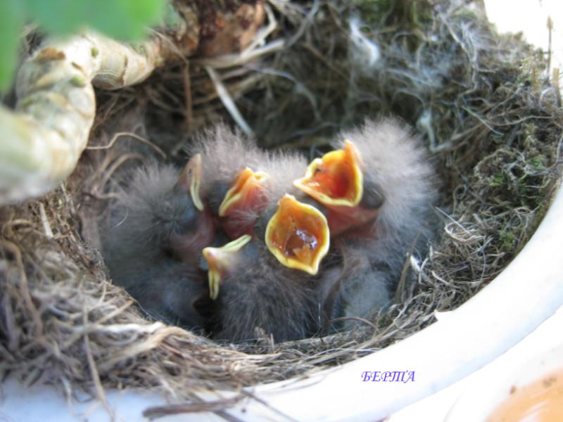 птенцы желтых птиц фото и название дачи семей