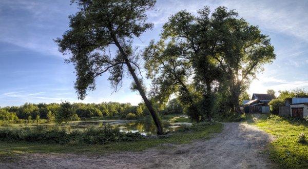 Старые ивы у пруда