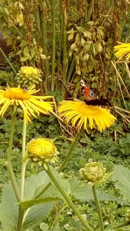 бабочки на цветах.jpg