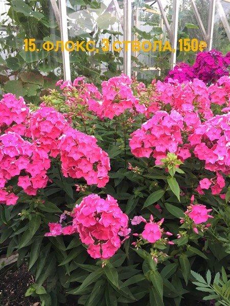 FullSizeRender-28-07-18-15-57-6.jpg.f71166f8dd27a3ba2ecd72dd18069847.jpg