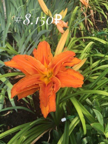 FullSizeRender-28-07-18-16-30.jpg.5957c6652cc42893da0b30c0a1dafa07.jpg