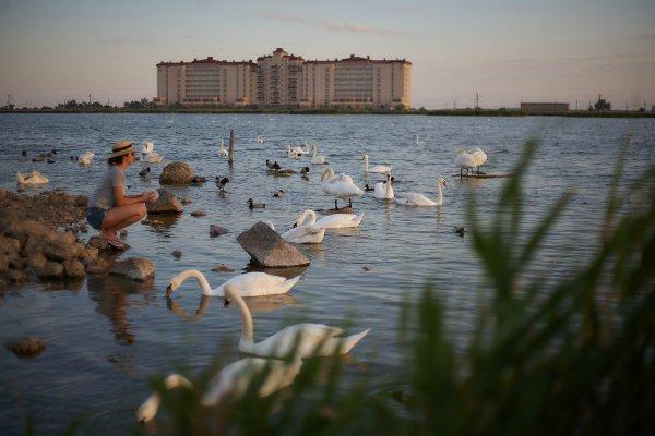 Озеро тысячи лебедей