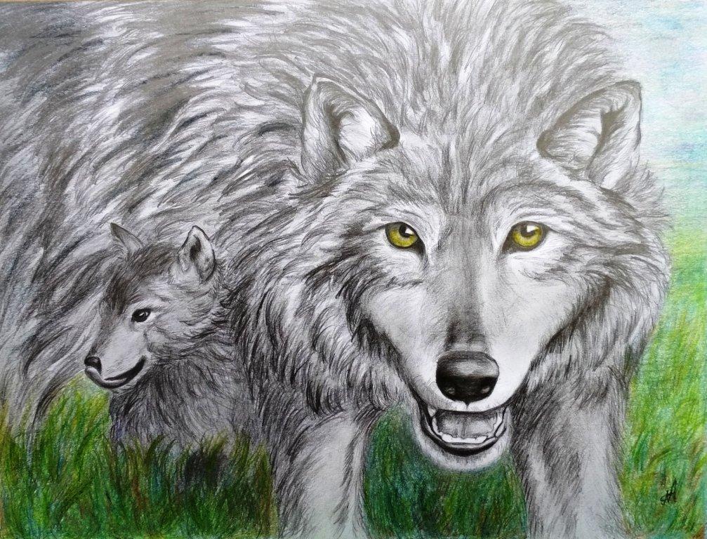 Мама волчица со своим малышастиком. Цветные карандаши.