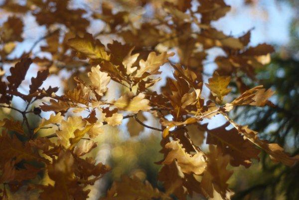 Осень в Абрамцево