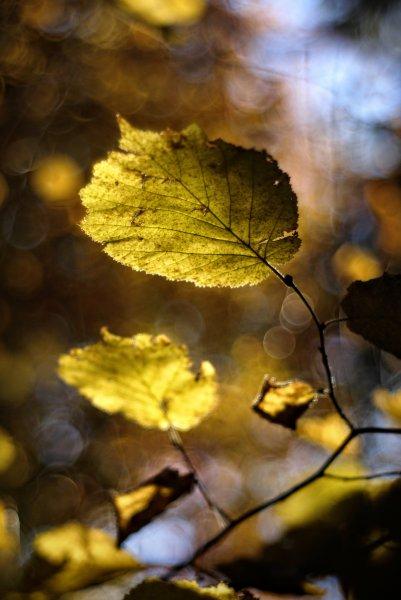 Осенний блюз..