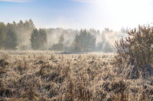 Морозный утренник