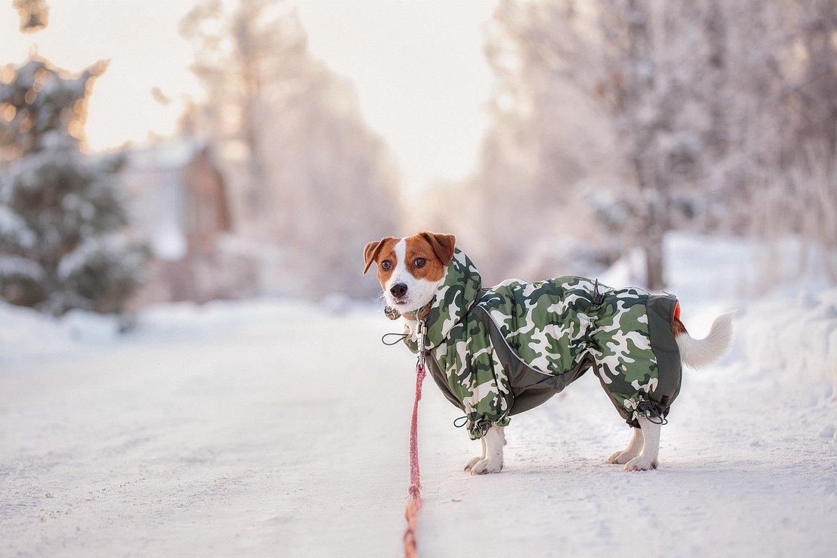 Морозным утром