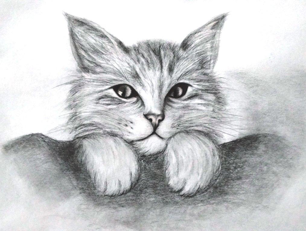 Котик Обормотик