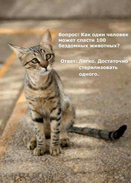 Стерилизация животного.jpg